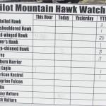 Pilot Mountain hosts 42nd annual Hawk Watch
