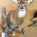 Surry to offer taxidermy orientation on Saturday