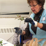 Gardening workshop series sprouts at the Surry Center of the N.C. Cooperative Extension