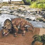 Dinosaurs on display at museum