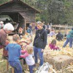 Crowds flock to Horne Creek Cornshucking
